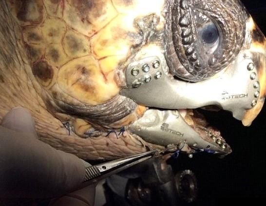 Tortuga - Biomateriales metálicos