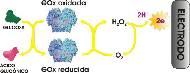 Biosensores de glucosa