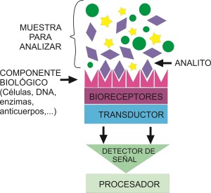 Partes de un biosensor