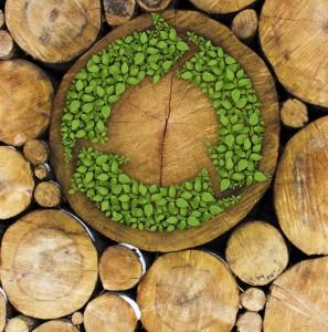 biomasa-energia-renovable-organica