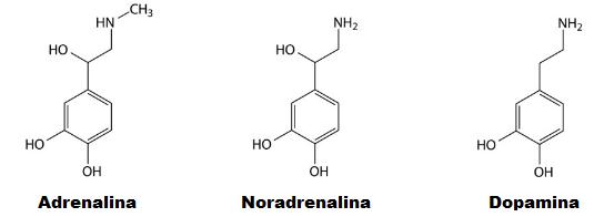 Catecolaminas adrenalina noradrenalina dopamina quimica